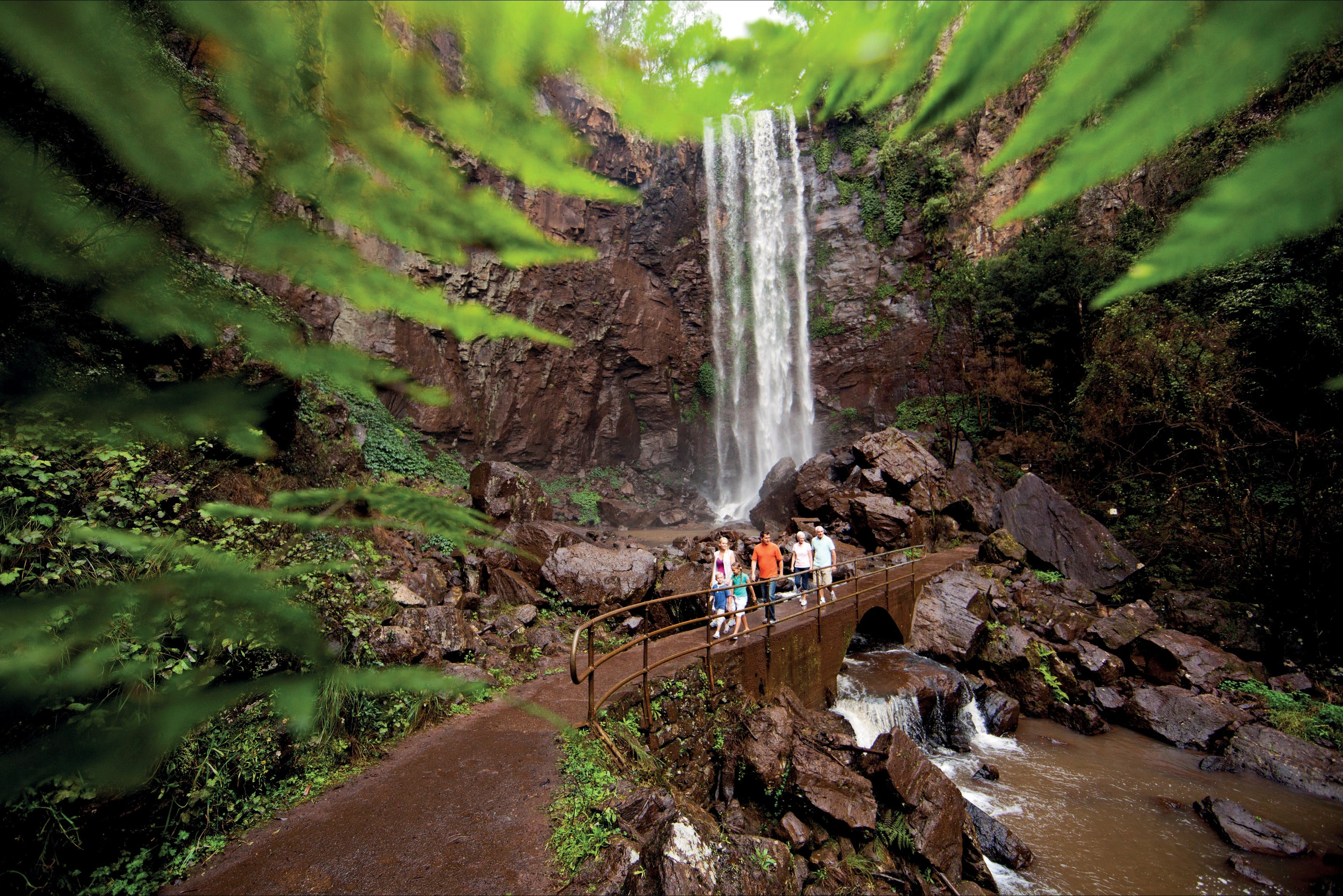 Queen Mary Falls circuit Main Range National Park - Accommodation Tasmania