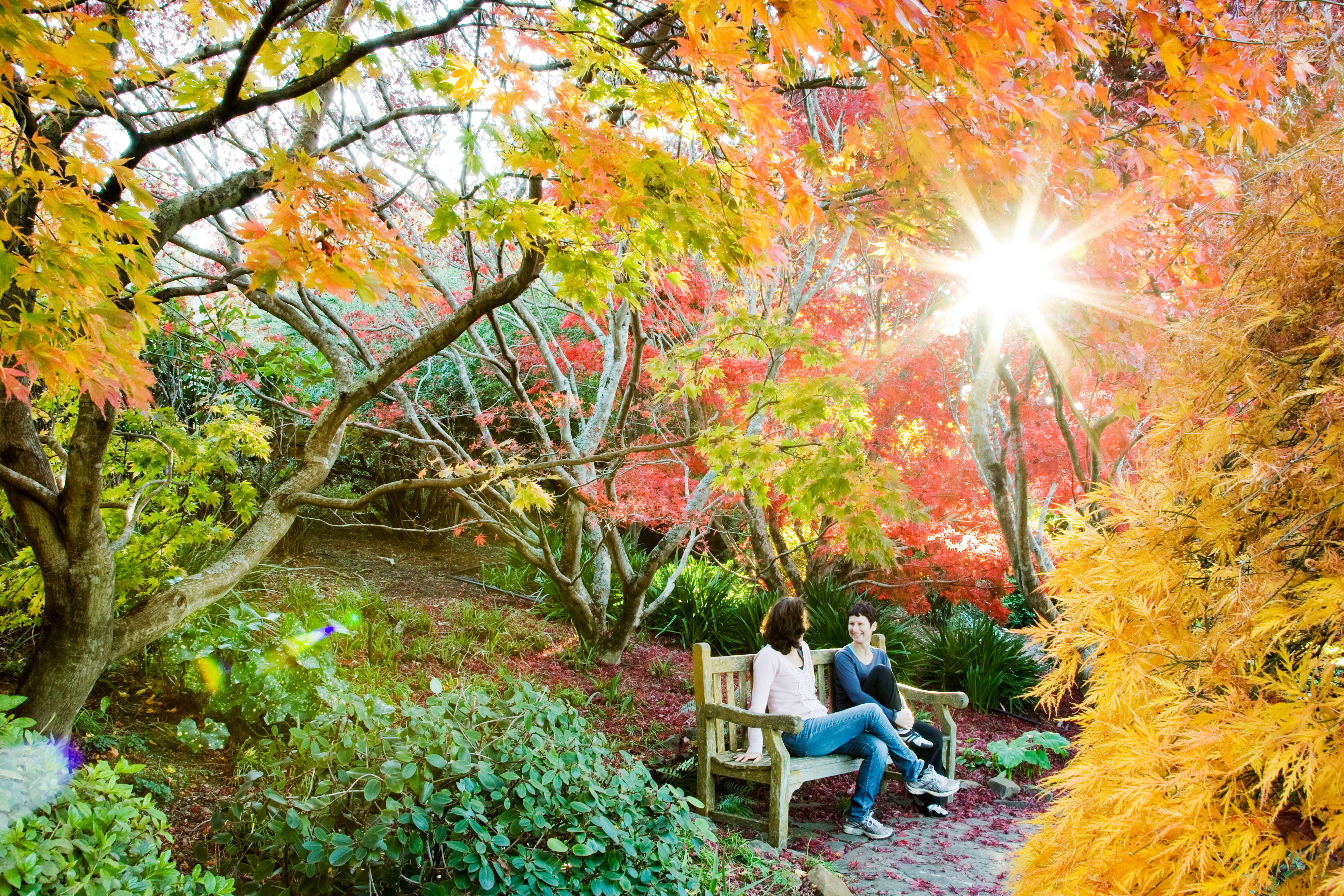 The Blue Mountains Botanic Garden Mount Tomah - Accommodation Tasmania