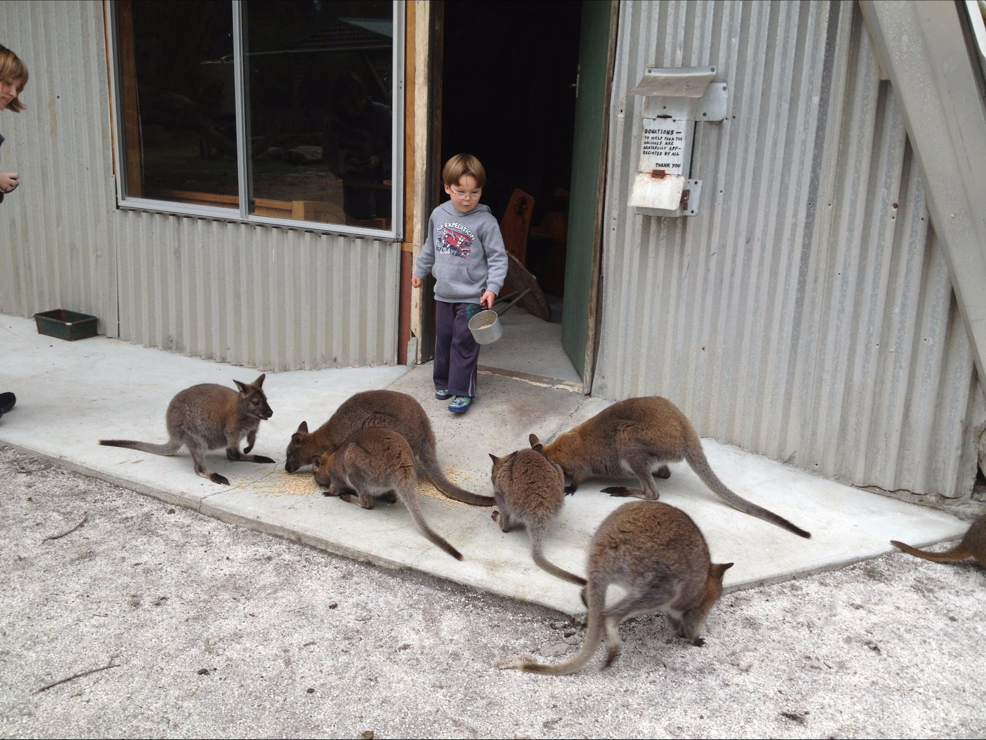 The Patriarch Wildlife Sanctuary - Accommodation Tasmania