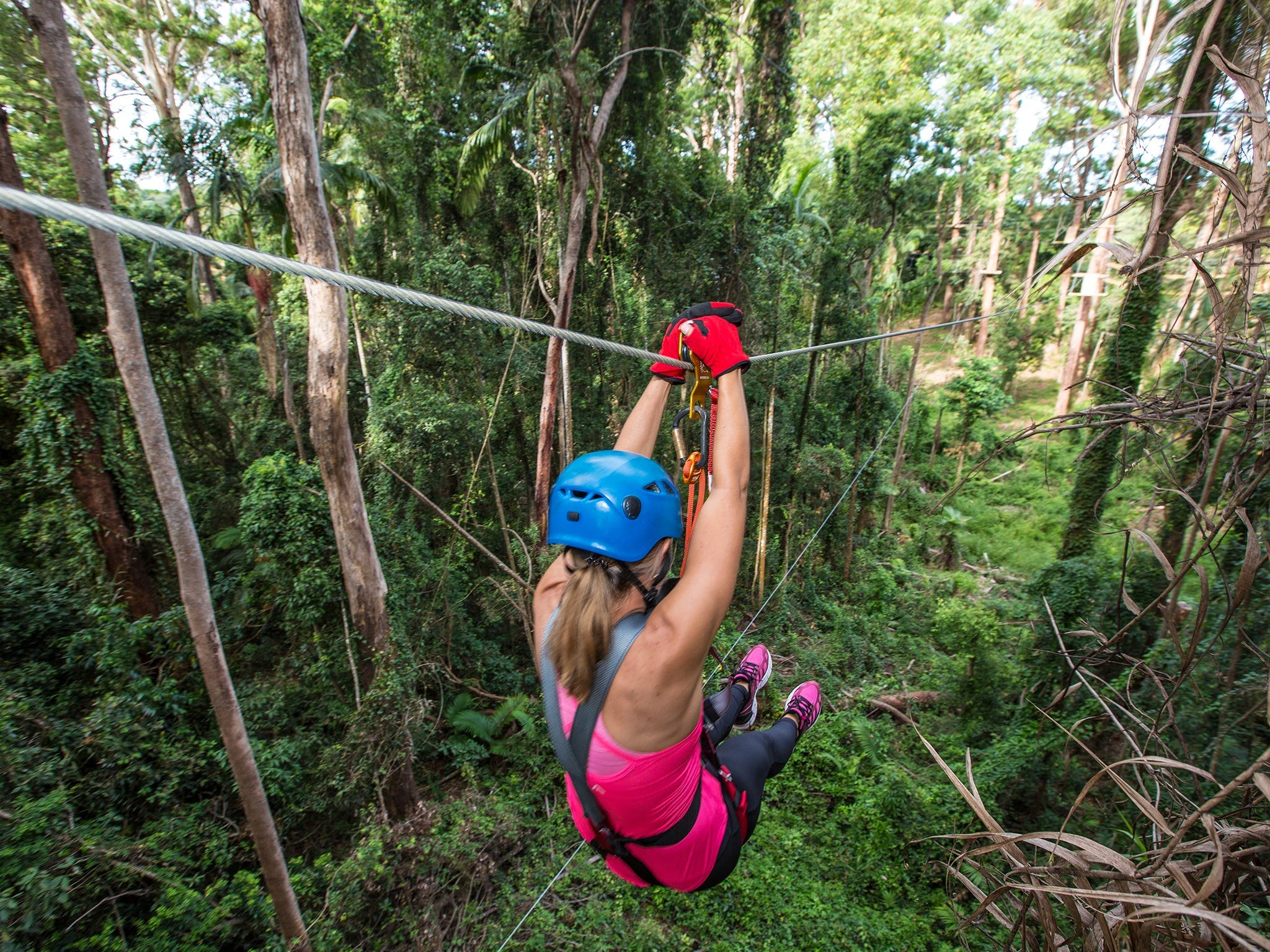 TreeTop Challenge - Sunshine Coast - Accommodation Tasmania
