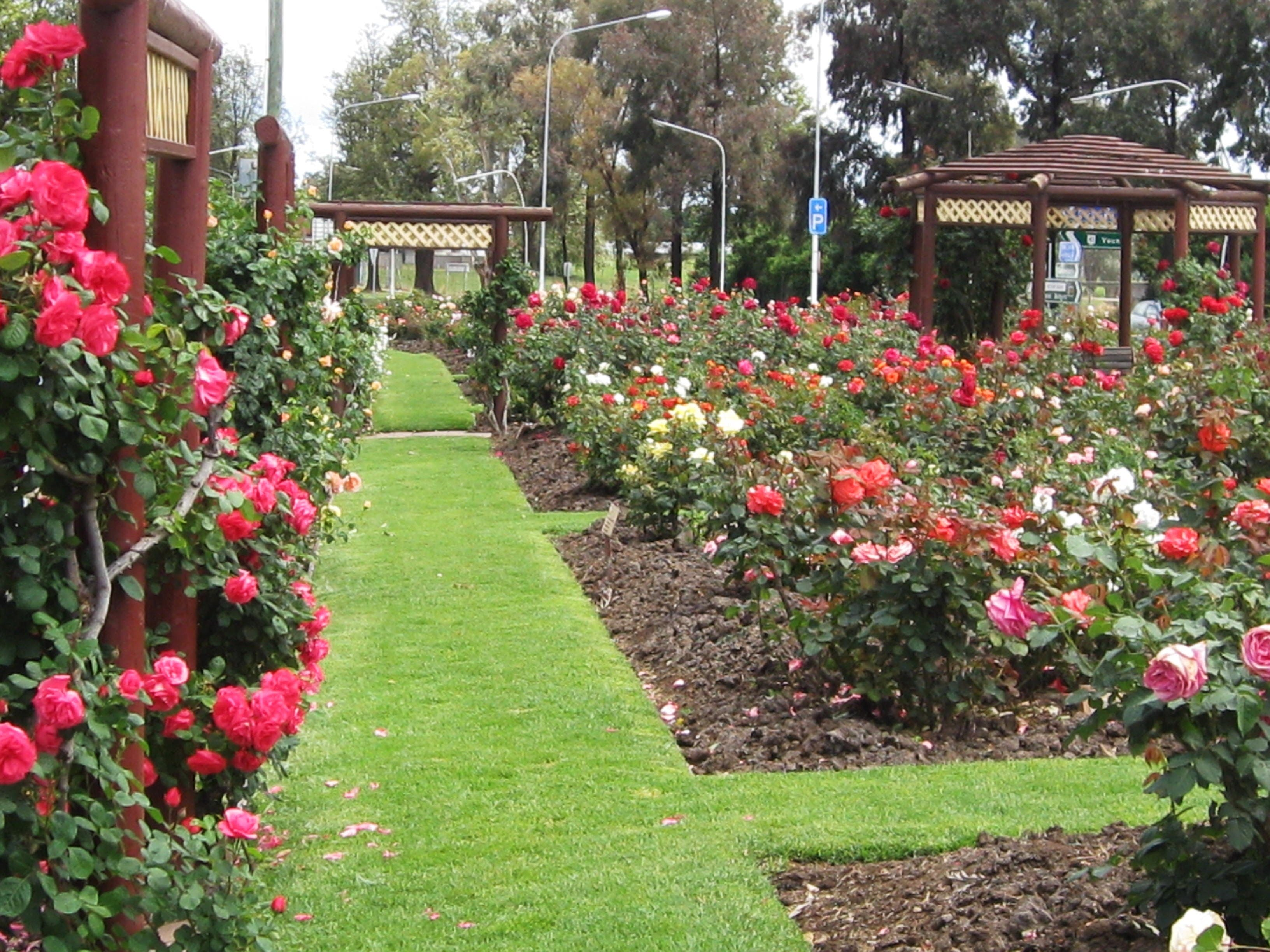 Cowra Rose Garden - Accommodation Tasmania
