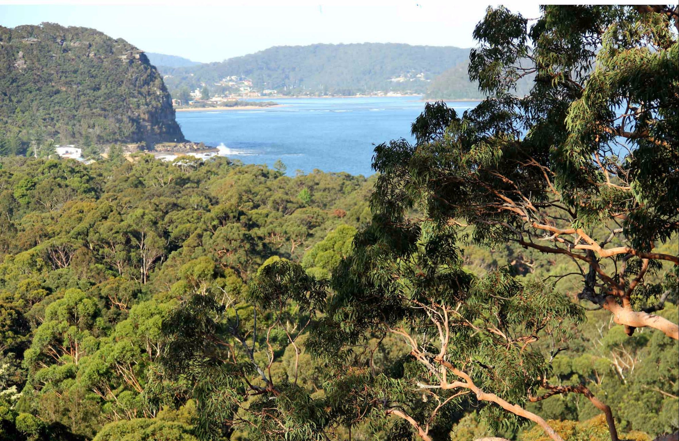 Patonga to Pearl Beach Walking Track - Accommodation Tasmania