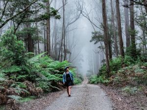 The Corn Trail Walking Track - Accommodation Tasmania