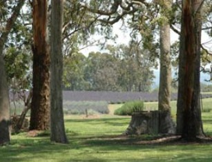 Aloomba Lavender - Accommodation Tasmania