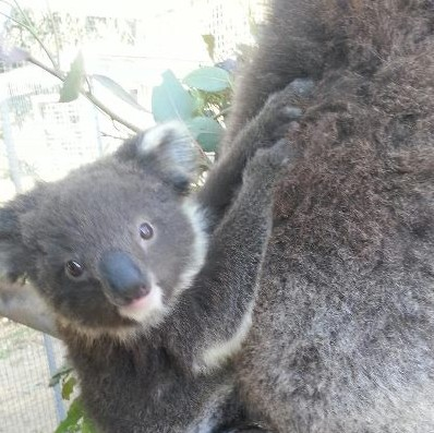 West Oz Wildlife Petting Zoos - Accommodation Tasmania