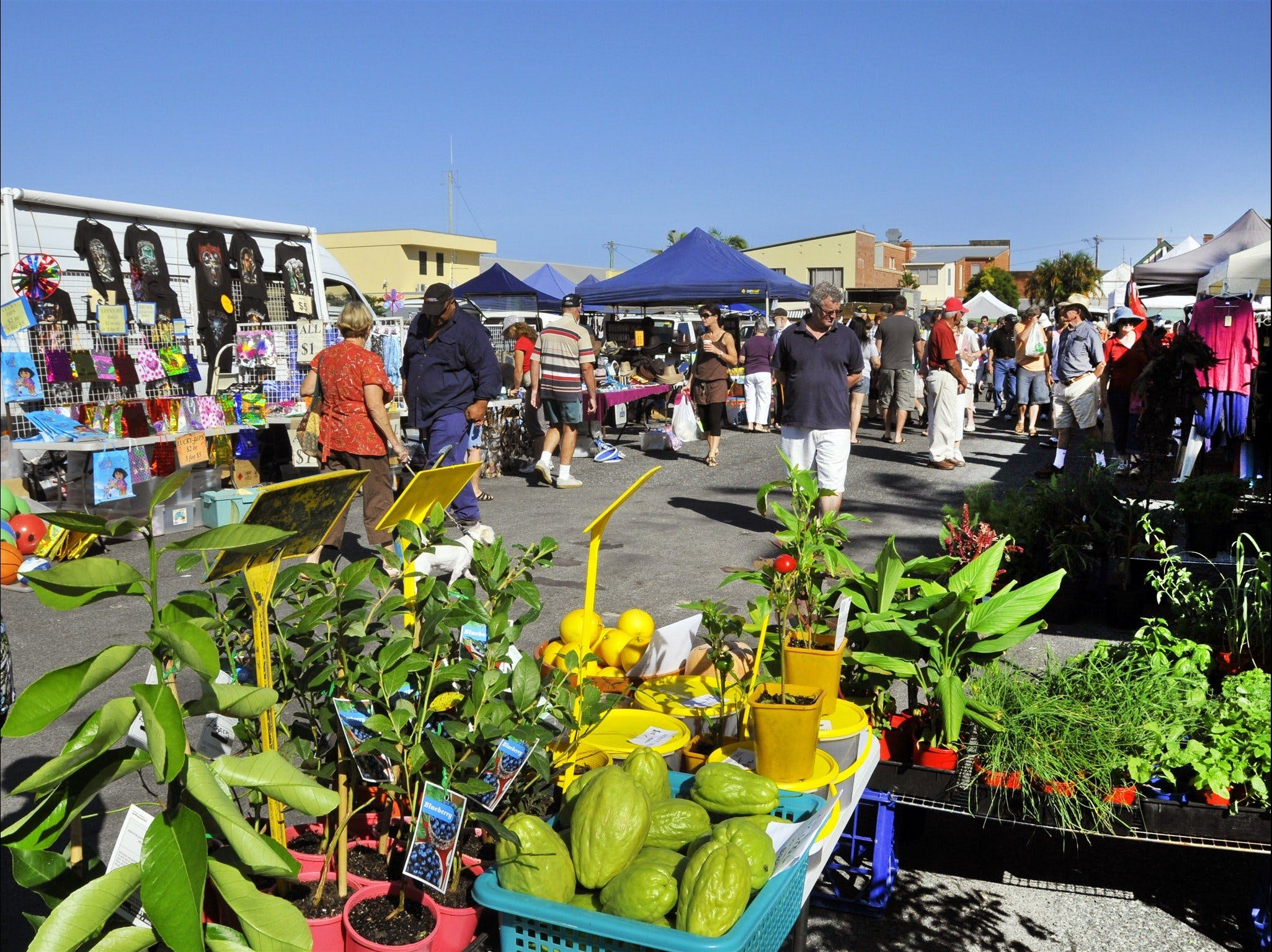 Maclean Community Monthly Markets - Accommodation Tasmania