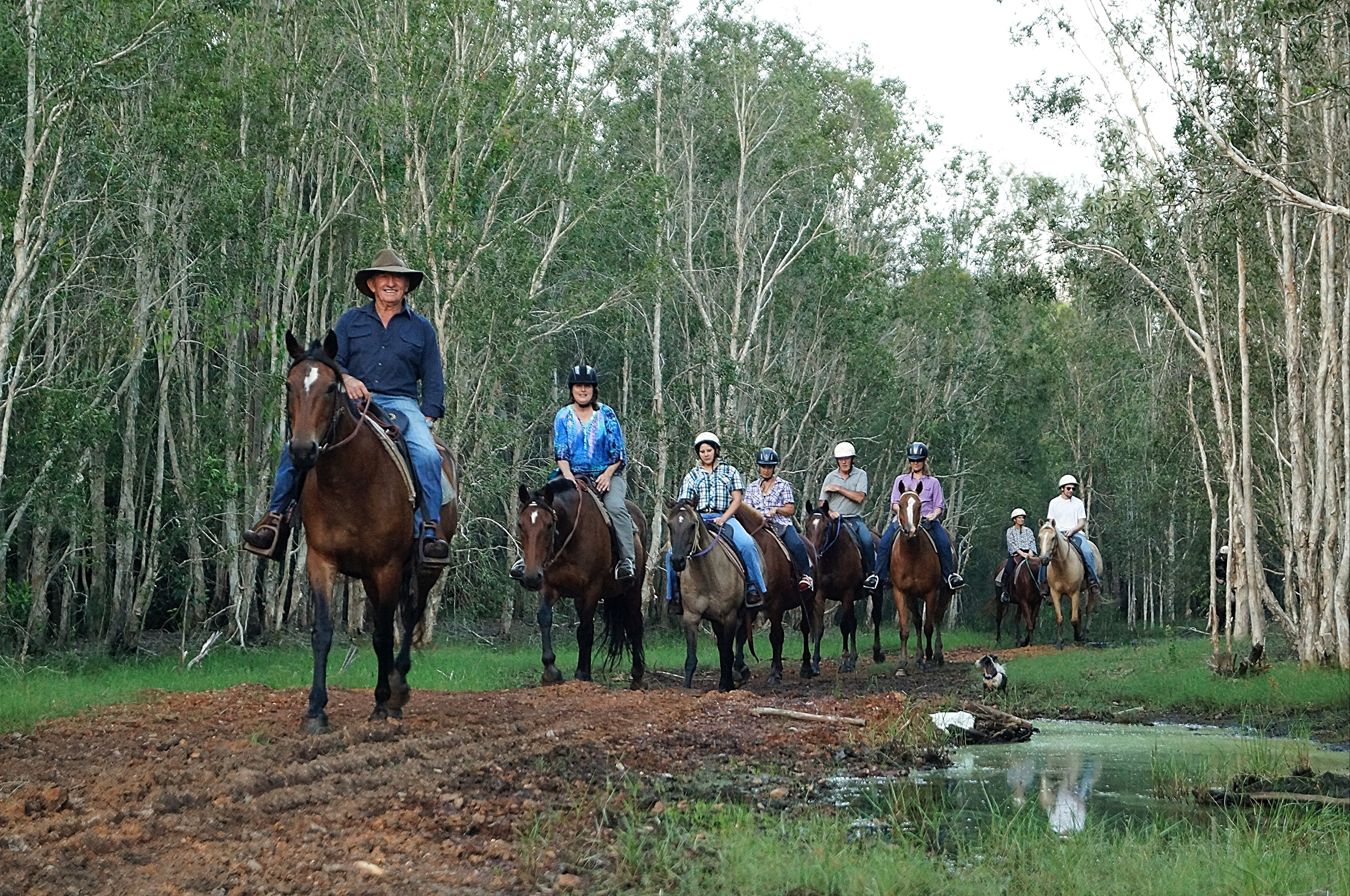 Night Horse Ride and Dinner - Accommodation Tasmania