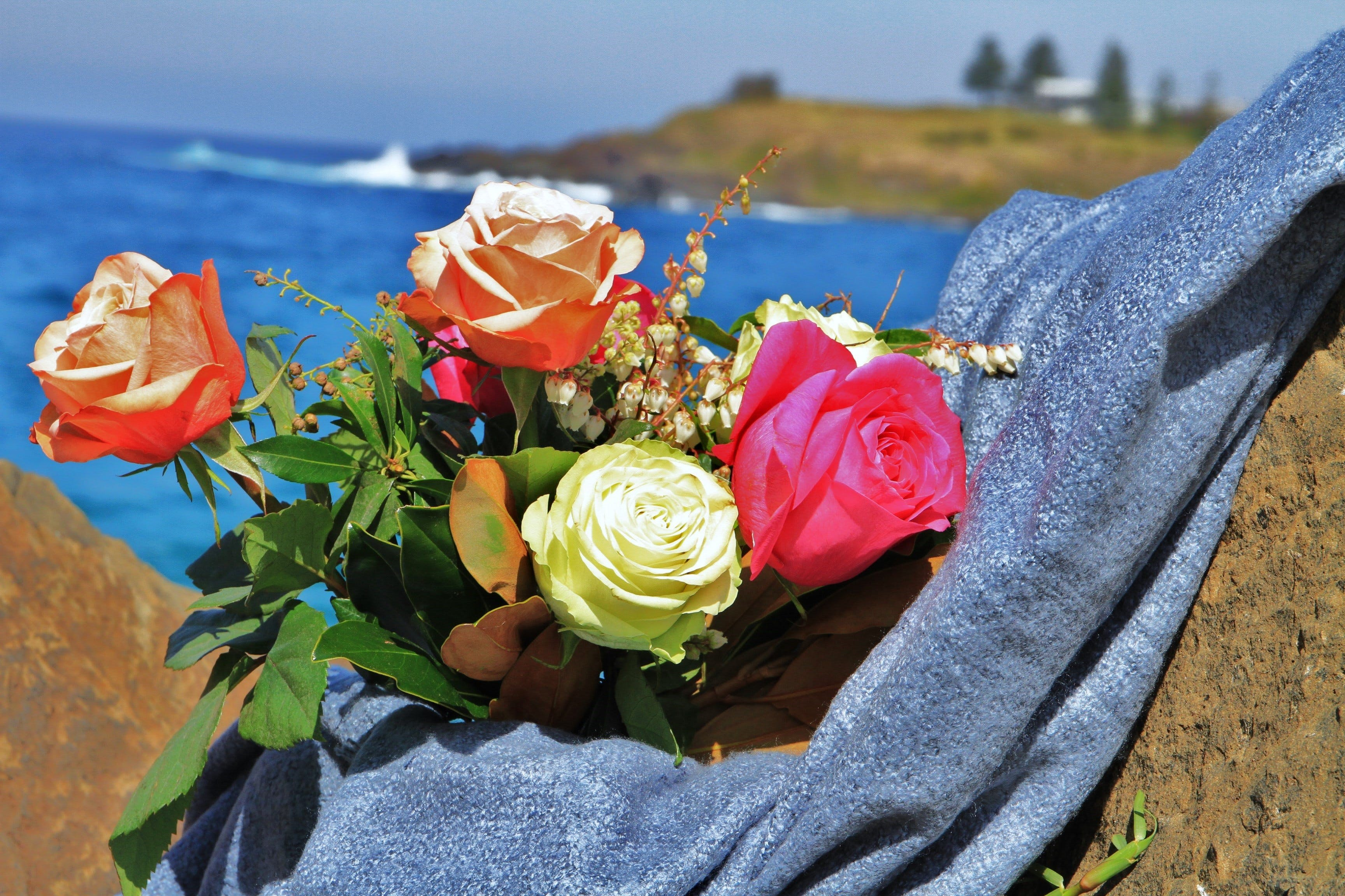 Roses by the Seaside National Rose Championships and Conference - Accommodation Tasmania