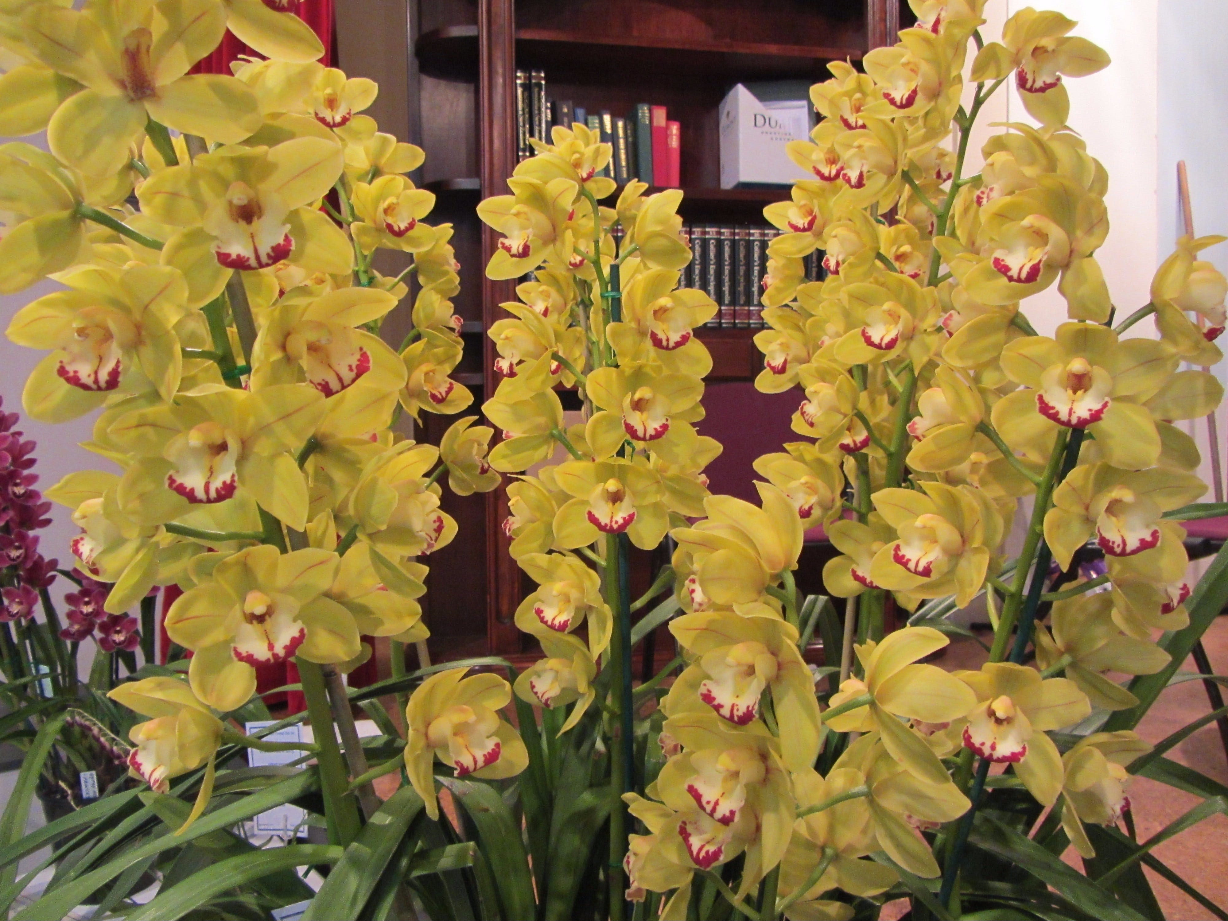 Sapphire Coast Orchid Club Winter Orchid Show - Accommodation Tasmania