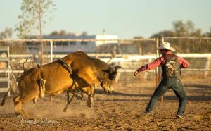 Walgett Charity Bushman's Carnival Rodeo and Campdraft - Accommodation Tasmania