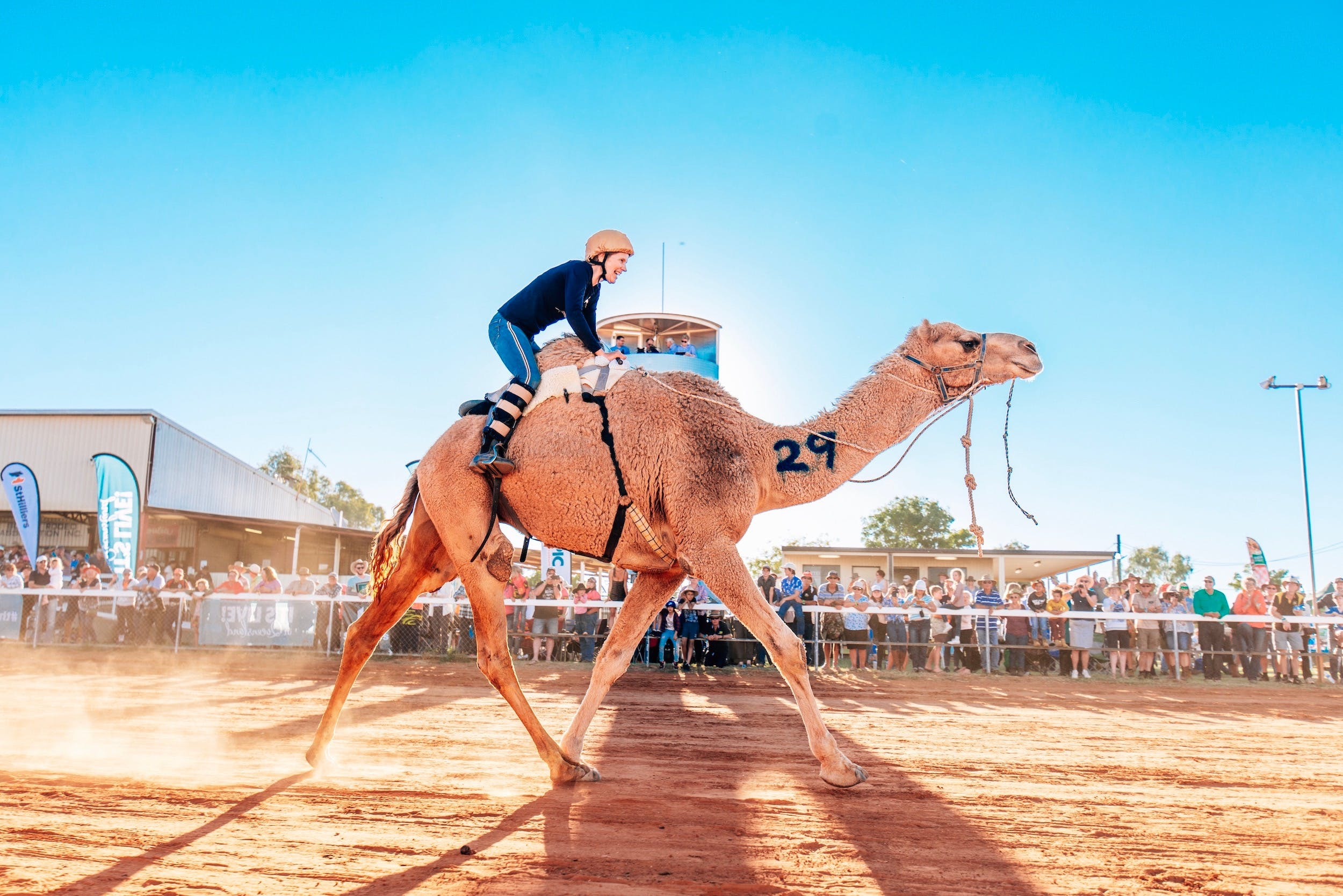 Boulia Camel Races - Accommodation Tasmania