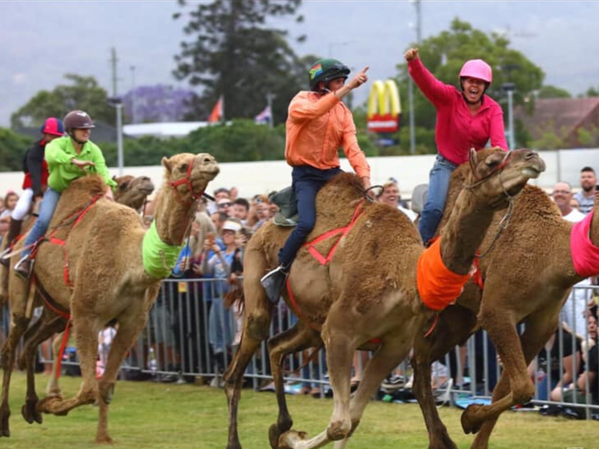 Camel Races at Penrith Paceway - Accommodation Tasmania