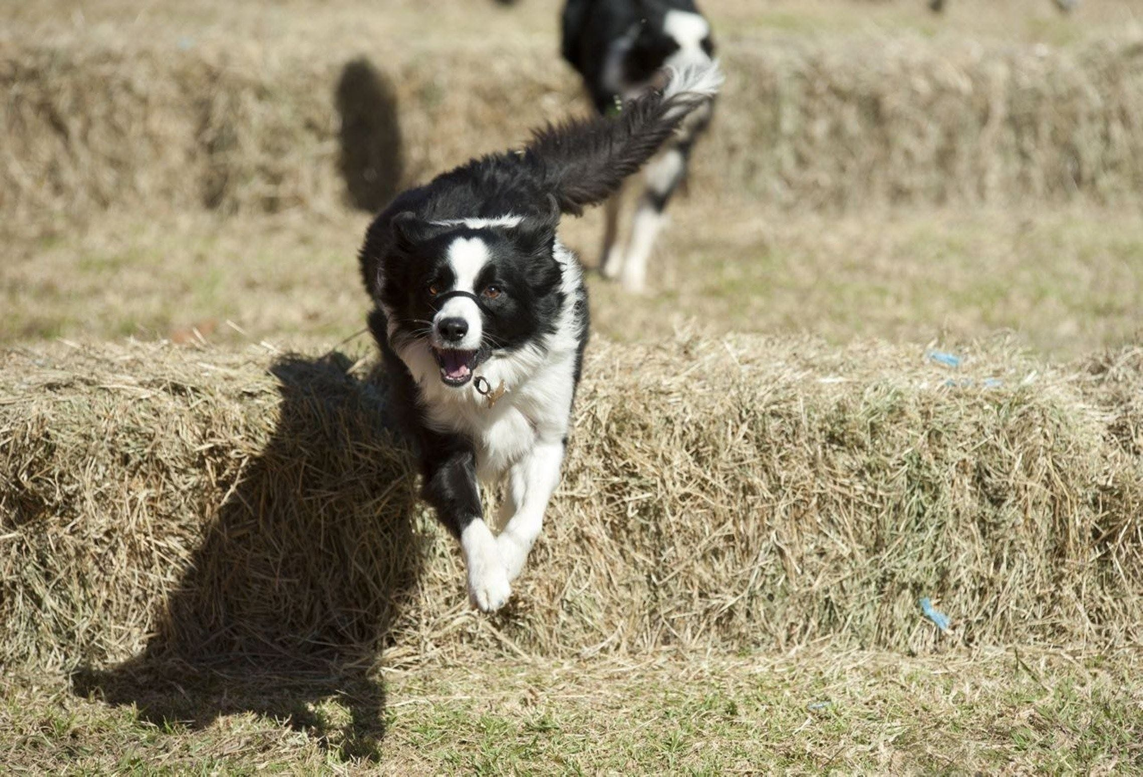 Great Nundle Dog Race - Accommodation Tasmania